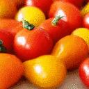 Rot-Alarm! Auftakt der Tomatensaison in heimischen Gewächshäusern