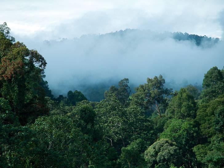 Wald in Malaysia