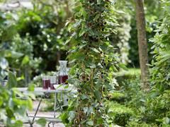 Kompakte süße Maulbeere mit FLORALL-Award ausgezeichnet