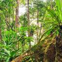Flasbarth ruft zu mehr finanziellem Engagement für den Schutz der biologischen Vielfalt auf