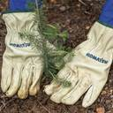 100.000 neue Bäume – der Komatsu Aktions-Wald für eine nachhaltige Zukunft
