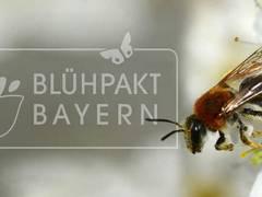 Glauber: Neues Pilotprojekt Erstberatung für Insektenschutz
