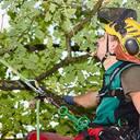 Ausbildung von Baumpflegern auf neuer Internetseite illustriert