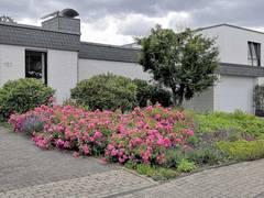 Hochsommer im Neubaugebiet: Schotterwüsten werden heiß diskutiert