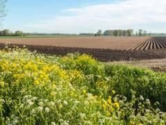 Bundeskabinett bringt Gesetze zur Umsetzung der EU-Agrarförderung in Deutschland auf den Weg
