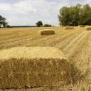 Bioraffinerie am Bauernhof der Zukunft
