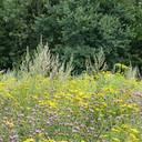 Wildpflanzenmischung