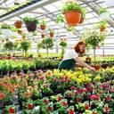 Fachliche Begleitung des Gartenbaus bei Torfminderung gesucht