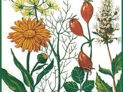 31. Bernburger Winterseminar für Arznei- und Gewürzpflanzen