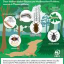 In Massen auftretende Schadinsekten können für Bäume und Waldbesucher zur Plage werden