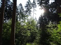 Acht waldreiche Kommunen starten eine überregionale Baumpflanzkampagne