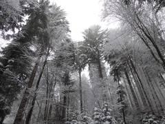Nachhaltigkeitsprämie Wald: Antragsverfahren erweitert