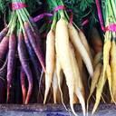 Nationales Inventar pflanzengenetischer Ressourcen (PGRDEU): Onlineportal erweitert