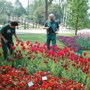 Fichter Garten- und Landschaftsbau