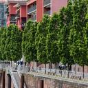 Masterplan Stadtnatur: BdB schätzt Investitionsbedarf auf mehr als 2 Milliarden Euro