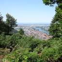 """Heidelberg hat einen zertifizierten """"Kur- und Heilwald"""""""