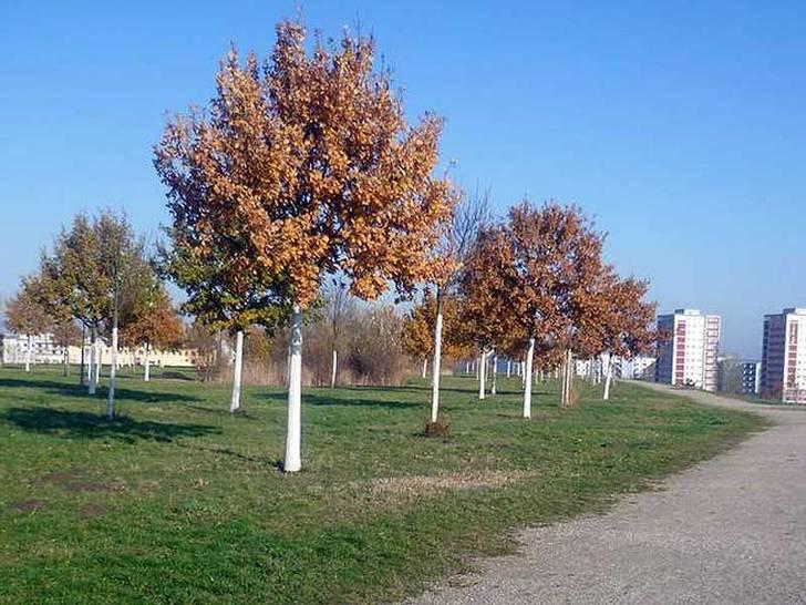 Jelena-Šantić-Friedenspark