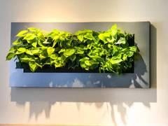 Pflanzen als Kunstwerke: Lebendige Wände sind dekorativ und verbessern das Raumklima