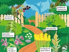 Exotische Pflanzen im Garten: Gefahr für heimische Wälder