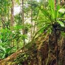 Im Einsatz für den Schutz des Amazonas-Regenwaldes – Peru festigt internationale Partnerschaft