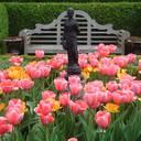 Der Wirkung Raum geben: Gärten kunstvoll in Szene gesetzt