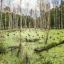 Bundesumweltministerium unterstützt neue UN-Dekade zur Wiederherstellung von Ökosystemen