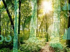 Mit KI Wälder schützen und bewirtschaften