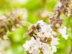 Baumschule E. Sander versteht sich als Partner in Sachen Bienenschutz