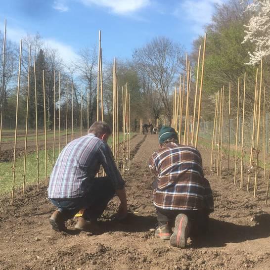 Der Schwetzinger Schlossgarten bekommt wieder eine Baumschule