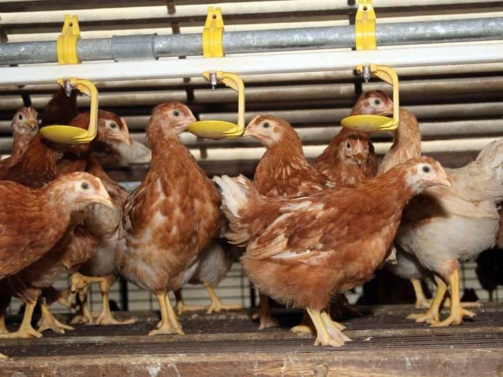 Tierarzneimittel - ein neues Problem für das Grundwasser?