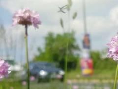 Kommunen schaffen Artenvielfalt