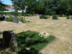 Gluthitze stresst Pflanzen und Friedhofsgärtner