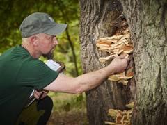 Baumpflege: Wenn Bäume kränkeln