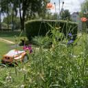 Mähroboter erlauben biologische Vielfalt auf dem Rasen