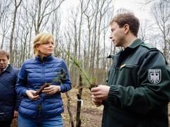 """Klöckner: """"Die Schäden im Wald sind besorgniserregend"""""""