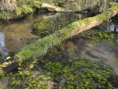 Der sandige Tieflandbach – unser Gewässertyp des Jahres 2018