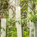Förderaufruf zum Waldklimafonds: BMEL und BMU unterstützen Projekte zur Forstpflanzenzüchtung
