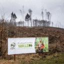 Wer wird PEFC-Waldhauptstadt 2022? Jetzt bewerben!