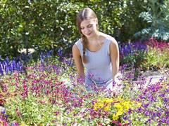 Bestäubervielfalt im Garten