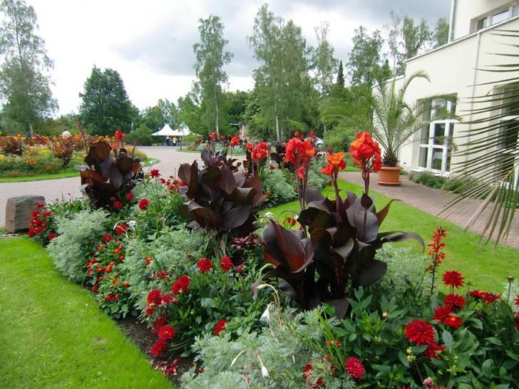 Verver-Sommer-Tram-Blumenzwiebeln