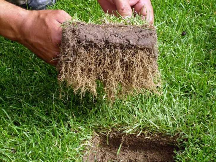 Wurzelwachstum der Grasnarbe