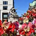 Flamingos auf der Kö: Anthurien-Installation begeistert Düsseldorf und Touristen