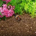 Bewässerung von Pflanzen