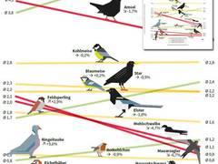 NABU: Broschüre 15 Jahre Stunde der Gartenvögel erschienen