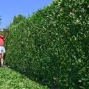 Garten und Hecken pflegeleicht bearbeiten und schneiden