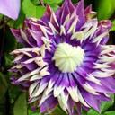 Plantarium-Fachmesse