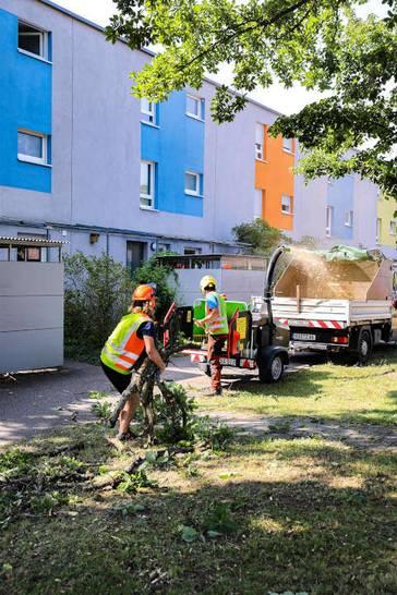 Für Arboristen geht ohne Häcksler nichts