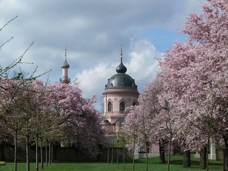 """Schlossgarten Schwetzingen Ein Traum in Rosa: """"Blühbarometer"""" der Kirschblüte ist online"""