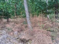 Von der Marwitz: Schnelle Unterstützung nötig zur Rettung der Wälder