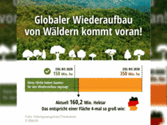 Wiederaufbau von Wäldern